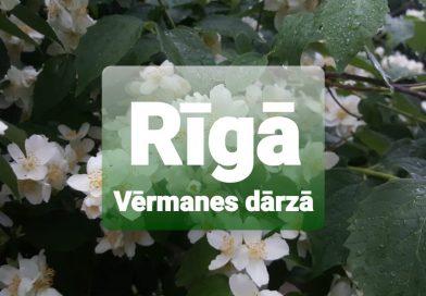 """Rīgā Vērmanes dārzā """"Muzikālais nakts gadatirgus"""""""